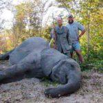 Tuskless Elephant Hunt