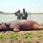 Hippo Hunts