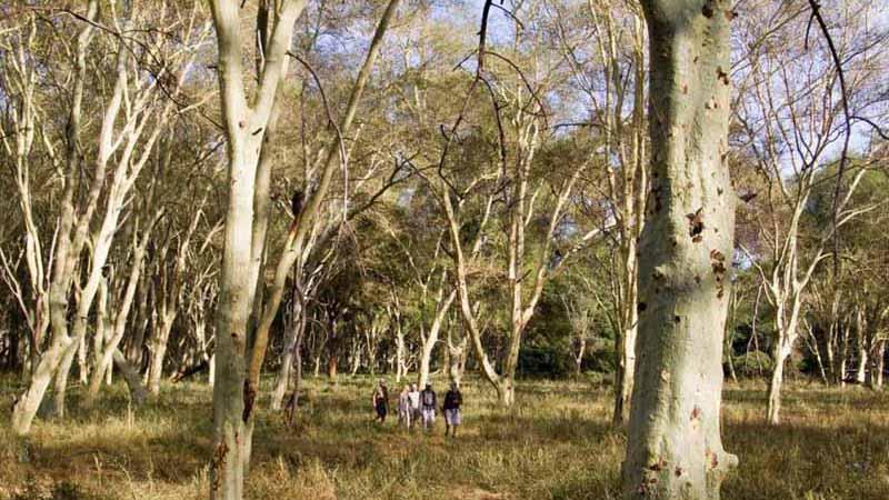 Sikumi Forest Area