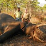 Elephant Hunting in Zimbabwe
